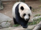 Pandi panda custom accompaniment track - Chantal Goya