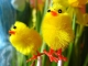 Playback MP3 Quand trois poules vont aux champs - Karaokê MP3 Instrumental versão popularizada por Comptine