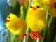 Instrumental MP3 Quand trois poules vont aux champs - Karaoke MP3 as made famous by Comptine