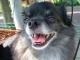 Backing Track MP3 Chihuahua - Karaoke MP3 as made famous by DJ Bobo