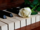Playback Piano - Ne me quitte pas - Céline Dion - Version sans Piano