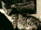 Die Katze custom accompaniment track - Annett Louisan