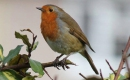 Karaoke de L'oiseau (Sébastien parmi les hommes) - Sol En Si - MP3 instrumental