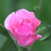 Karaoké The Last Rose Of Summer Celtic Woman