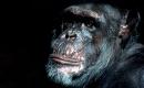 Le gorille - Karaoké Instrumental - Georges Brassens - Playback MP3