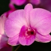 Karaoké I Overlooked an Orchid Mickey Gilley