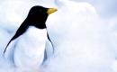 Le ragga des pingouins - Karaoké Instrumental - Pigloo - Playback MP3