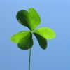 I'm Looking Over A Four Leaf Clover Karaoke Harry M. Woods