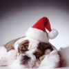 Lonely Pup (In A Christmas Shop) Karaoke Adam Faith