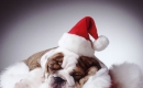 Jingle Bells - Karaoke backingtrack MP3 - Singing Dogs