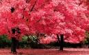 Karaoke de La Vie En Rose (English version) - Edith Piaf - MP3 instrumental
