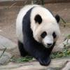 Karaoké Pandi panda Chantal Goya