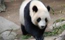 Pandi panda - Karaoké Instrumental - Chantal Goya - Playback MP3