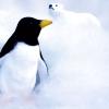 Karaoké Penguin Christina Perri