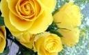 18 Yellow Roses - Instrumental MP3 Karaoke - Marty Robbins