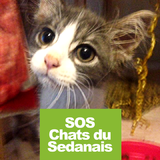 SOS Chats du Sedanais