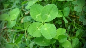 Green and sing: songs to celebrate St. Paddy's Day!
