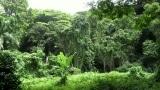 Playback MP3 Son of Man - Karaoke MP3 strumentale resa  famosa  da Tarzan (1999 film)