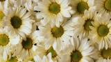 Playback MP3 Sunflower - Karaokê MP3 Instrumental versão popularizada por Post Malone