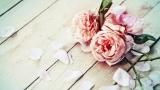 Con il nastro rosa base personalizzata - Lucio Battisti