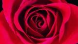 The Power Of Love niestandardowy podkład - Céline Dion