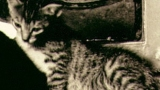 Cat's In The Cradle kustomoitu tausta - Ugly Kid Joe
