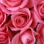 Room Full of Roses Karaoke Mickey Gilley