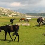 Wild Horses Karaoke Susan Boyle
