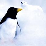 Karaoké Le papa pingouin Pigloo