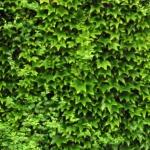 Camouflage Karaoke Brad Paisley