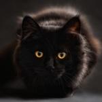 Karaoké Un gato en la oscuridad (Un gato en Blu) Roberto Carlos