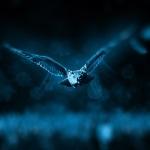 Fly by Night Karaoke Rush