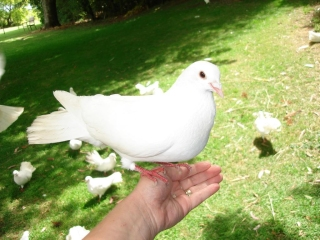 When Doves Cry Instrumental Mp3 Karaoke Prince