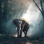 Elefant Karaoke Lea