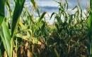 Karaoke de Corn - Blake Shelton - MP3 instrumental